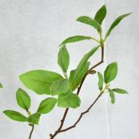 造花 FIAN ネオユーカリスプレー LS0048-GR 01   造花葉物、フェイクグリーン ユーカリ