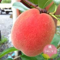 ●品種の特徴 この品種の最大の魅力は何といっても梅雨入り前までに収穫できるのがうれしいです! 着色も...