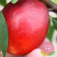 ●品種の特徴 ネクタリンは外皮に毛がないモモです。 果形は楕円形で果重は220〜250gと大実です。...