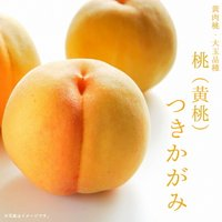 ●商品の特徴 大果で糖度も高い、晩生品種の黄桃です。果実は350gほどまで大きくなり、糖度は13度前...