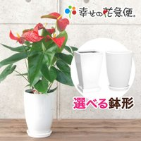 ◆商品詳細◆  【サイズ】 陶器鉢 直径 20cm 高さ 20cm 植物全体(鉢含む) 高さ約65c...