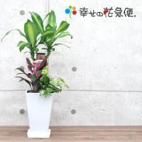 観葉植物 寄せ植え(ユッカ)6号角陶器鉢 誕生日プレゼント インテリア 人気