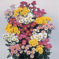 菊は日本を代表する花でっせ。 切り花にしても重宝するし、食べれるし。知ってました? よく食用菊って有...