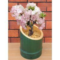 震災の後、被災地小学校の入学式に合わせて咲かせた桜。 今までと違って竹筒に植えてみたのですが、ちょっ...
