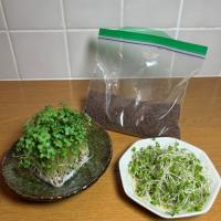 ■一年草 / 種子 ■種:約200ML(市販されている量であれば40回以上、収穫できます)ビニール袋...