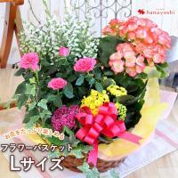 鉢植え 花 誕生日 プレゼント 寄せ鉢 フラワーバスケット 季節のおまかせ花鉢とグリーンの寄せ入れ<Lサイズ> あすつく対応