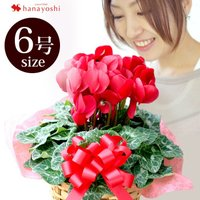 お歳暮・クリスマスプレゼント・冬のフラワーギフトに最適! 冬の花ギフトはこれに決まり! 色鮮やかな花...