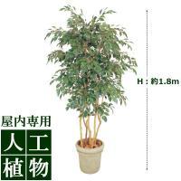【人工植物】グリーンデコ ベンジャミン 立木 5本立 1.8m