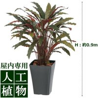 【人工植物】グリーンデコ カラテアR レッド 0.9m