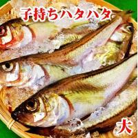 子持ち ハタハタ 大 1.5kg(500g×3P) 18~21尾 生冷凍 東北 山形県産 天然 旬 ぶりこ ブリコ メス 鮮魚 はたはた 鰰
