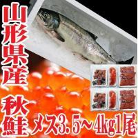 秋の味覚として非常にポピュラーな秋鮭は、捨てるところが少なく、様々な調理法でお召し上がりいただけます