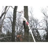 枝打ち一発 6.5m(N-763)枝打ち鋸 7段階 ニシガキ|hearty-e|02