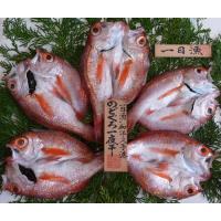 島根県大田市の特産品ブランド『おおだブランド』に認証された一日漁の一夜干【のどぐろ】、小ぶりのものを...
