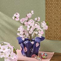 南殿桜。京都御所の南殿に咲いていたことからこの名がつけられました。京都御所の庭には春になると桜が咲き...