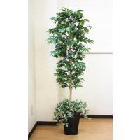 光触媒人工観葉植物 アルデシア(下草付)1.5m