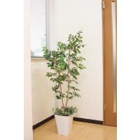 光触媒観葉植物 マウンテンアッシュ(下草付)1.3m