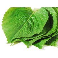 ・βカロテンやビタミンCが豊富 エゴマの葉にはβカロテンやビタミンCの他、ビタミンEも豊富で、これら...