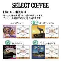 送料無料 自家焙煎 コーヒー ギフト 濃厚 チョコレートケーキ 【 ヒロ大黒 】 と スペシャルティ コーヒー 選べる 300g セット|hirocoffee-shop|03