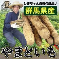 【島田ファーム産 やまといも 2kg詰め ギフトBOX】やまといも(大和芋)の栽培はとても手間がかか...