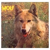 Darryl Way&Wolf ダリルウェイ&ウォルフ / Canis Lupus + 2 国内盤 〔SHM-CD〕|hmv