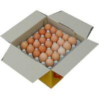 卵 たまご 玉子 (送料無料)美野里たまご加賀の朝日25コトレイ箱詰め