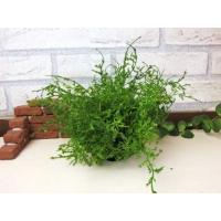 【コーラルファーンピース】造花のグリーン リーフ ナチュラル雑貨 インテリア雑貨