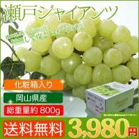 岡山産 瀬戸ジャイアンツ(1房入り・約800g)   桃太郎ぶどうの名で販売されているのはこの品種で...