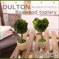 DOLTON Boxwood topiary ダルトン ボックスウッドトピアリー Sサイズ 観葉植物 インテリア トピアリー ボックスウッド ブリザードフラワー ギフト 母の日 かもめ