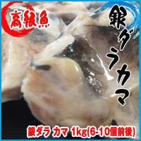 高級魚でおなじみ、銀ダラのカマ肉をどーんとたっぷり1kg!  お腹と頭の間の部位で、銀ダラの中でも脂...