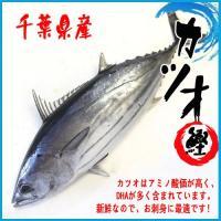 千葉勝浦産 カツオ 1尾(約1.5-2.5kg) 鰹 かつお  カツオはアミノ酸価が高く、DHAが多...