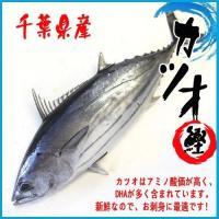 カツオ 1尾(約2.6-3.5kg)千葉県産    カツオはアミノ酸価が高く、DHAが多く含まれてい...
