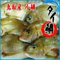 【業務用】小鯛 2.5kg以上(4〜5尾前後入)鯛 タイ たい 鳥取産  鯛めし、塩焼、鯛汁、鯛の煮...