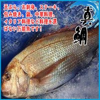 真鯛 活〆 約1.5〜1.8kg  活〆とは・・・ 活魚を血抜きし、死後の身に血が回るのを防ぎ、鮮度...