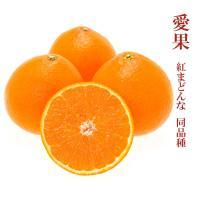ちょっと訳あり商品について 糖度落ちの可能性が高いお品になります。 こちらの商品は愛媛県で栽培されて...
