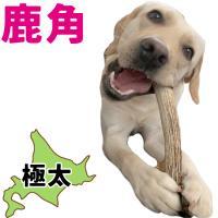 北海道産★鹿の角★犬のおもちゃ15~25cm【送料無料】大型犬喜ぶ頑丈な犬のおもちゃ鹿角『角王(つのおう)』