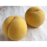 皇室献上品として果物王国が誇る『福島の桃』!本場の黄金桃をご賞味ください!!   ◆内    容◆福...