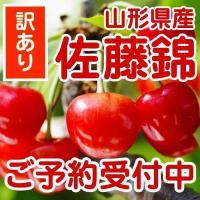 「佐藤錦」は糖度が高く、甘さ十分、そして酸味とのバランスが抜群に良い品種です。 赤く色付いた果実は甘...
