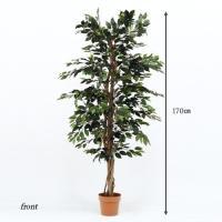 人工観葉植物 H170 インテリア 観葉植物 フィカス ゴムの木