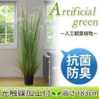 光触媒加工付き人工観葉植物 サニーグラス 高さ183cm