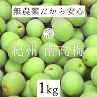 無農薬 南高梅 青梅 1kg 熊野のご褒美 無化学肥料 梅干し 梅酒・梅ジュース用 除草剤不使用 和歌山