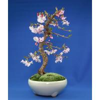 【枝姿】十月桜盆栽(ジュウガツザクラ)【送料無料】