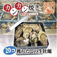 送料無料!  三重県鳥羽名産の殻付牡蠣をカンカンにつめました。  20個入っています。   届いたら...