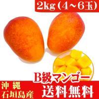 自宅用にオススメな石垣島B級マンゴー 形や色に違いはあるけど、完熟マンゴーの濃厚な甘さや美味しさを存...