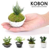 ●箱サイズ/約120×105×85mm ●商品内容/プリザーブド盆栽  KOBONはプリザーブドグリ...