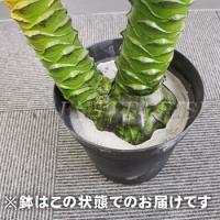 Funderful 人工観葉植物 光触媒 パームヤシ 135cm 消臭 フェイクグリーン 光触媒 ヤシの木 観葉植物 椰子