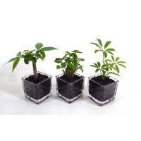 GブロックS  キューブ 3個セット 炭植え 観葉植物/ハイドロカルチャー/水耕栽培/インテリアグリーン