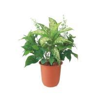 フェイクグリーン フィロミックスブッシュ 60 D-F 人工観葉植物 光触媒対応 インテリア