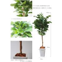 フェイクグリーン 光触媒 150cm ゴムの木