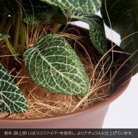 フェイクグリーン カジュアルポット フィットニア ポトス オランダ イングリッシュ 人工観葉植物 光触媒対応 インテリア