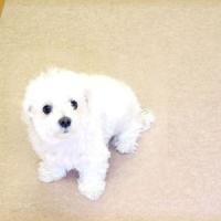 ペットのおしっこ消臭に抜群のディスメルクリーンワンは、ディスメル繊維により、トイレ(尿)等の嫌な刺激...